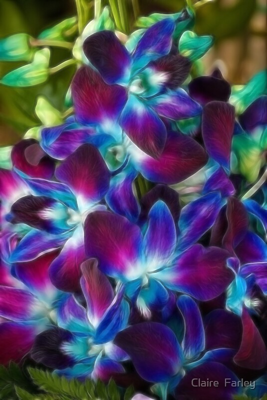 Beautiful coloured Orchids by Claire Farley  Redbubble