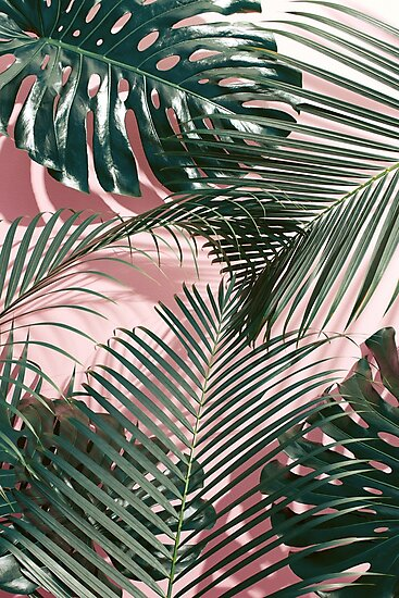 Green tropical leaves on a pink wall  Palm leaves