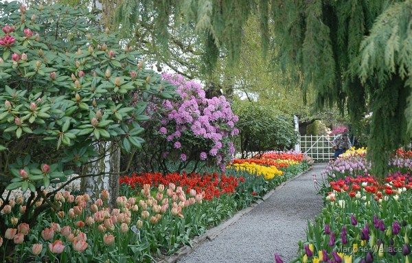 """""""beautiful spring garden"""" marjorie"""