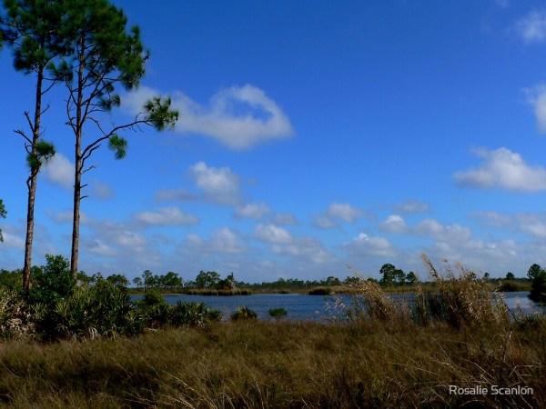 """""""natural florida landscape"""""""