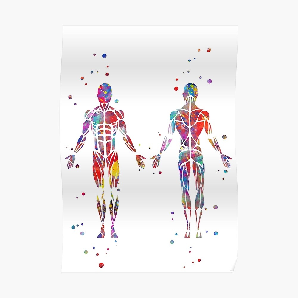 hight resolution of muscular system watercolor anatomy art human muscles medical art skeletal muscles man body poster