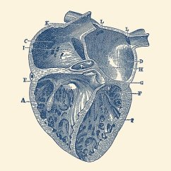 Vintage Diagram 1999 Nissan Altima Distributor Wiring Inner Heart Anatomy Photographic Prints By
