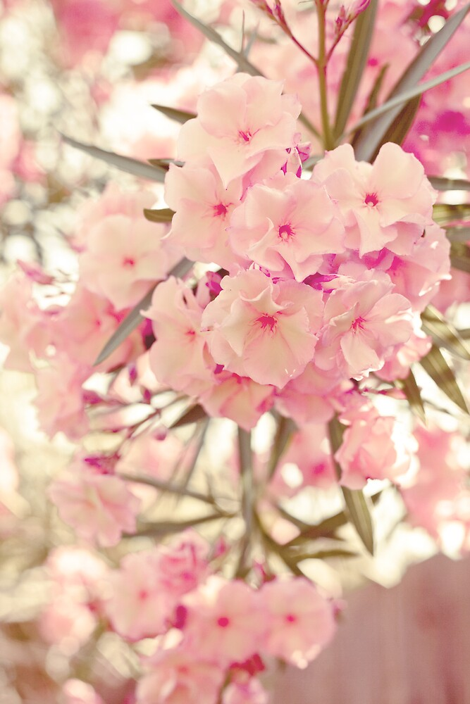 pretty pink flowers by laurie pena  Redbubble