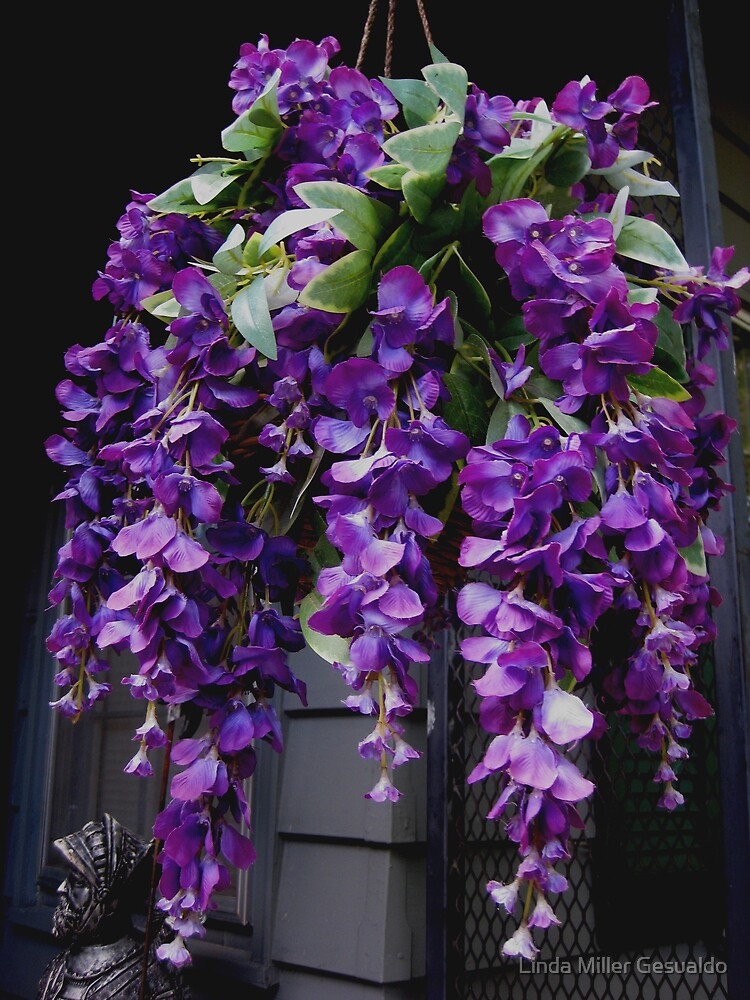 Hanging Basket Purple Wisteria by Linda Miller