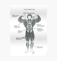 anatomy diagram muscle chart front poster by superfitstuff redbubble [ 1000 x 1000 Pixel ]