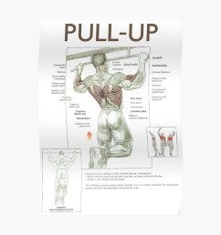 pull up exercise diagram poster [ 1000 x 1000 Pixel ]