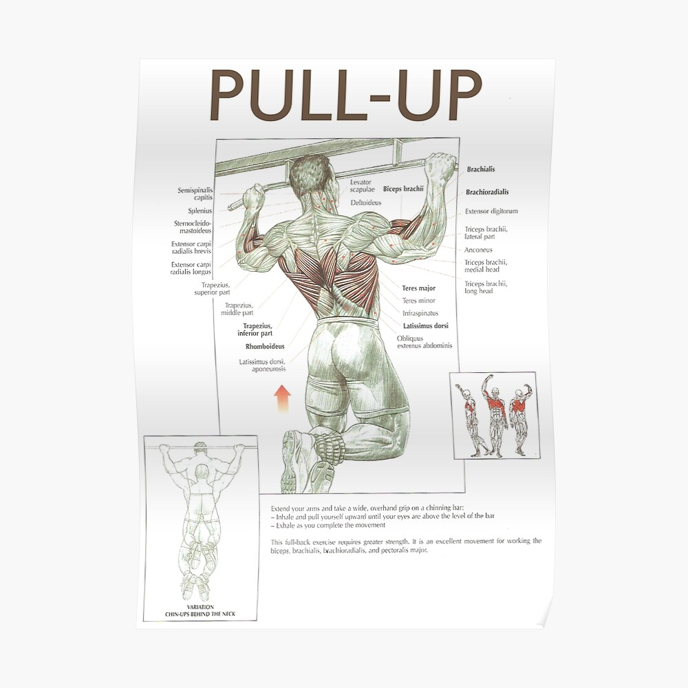 medium resolution of pull up exercise diagram poster
