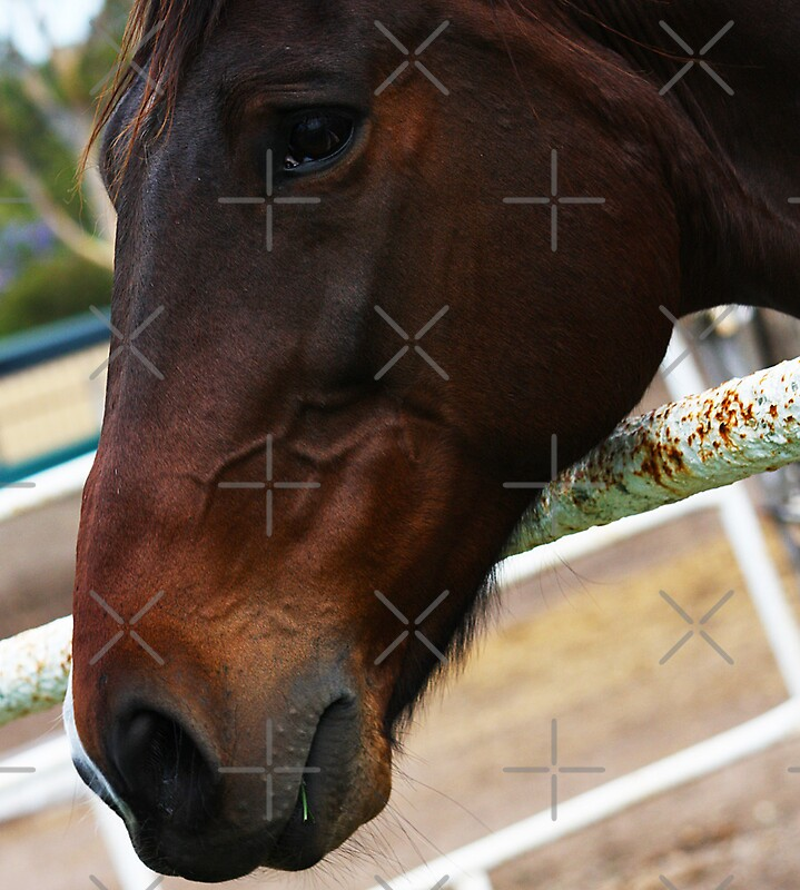 Horse Cliche Why the long face by Lawrie McConnell