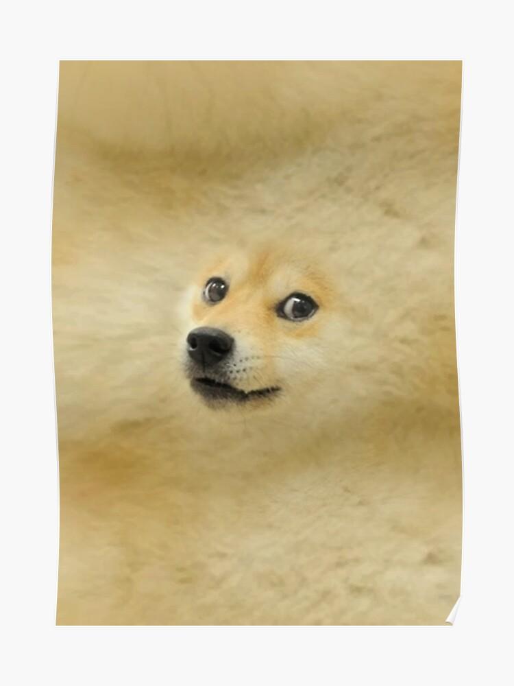 doge meme dog style