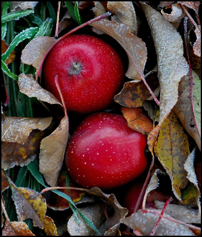 Image result for frosty apples