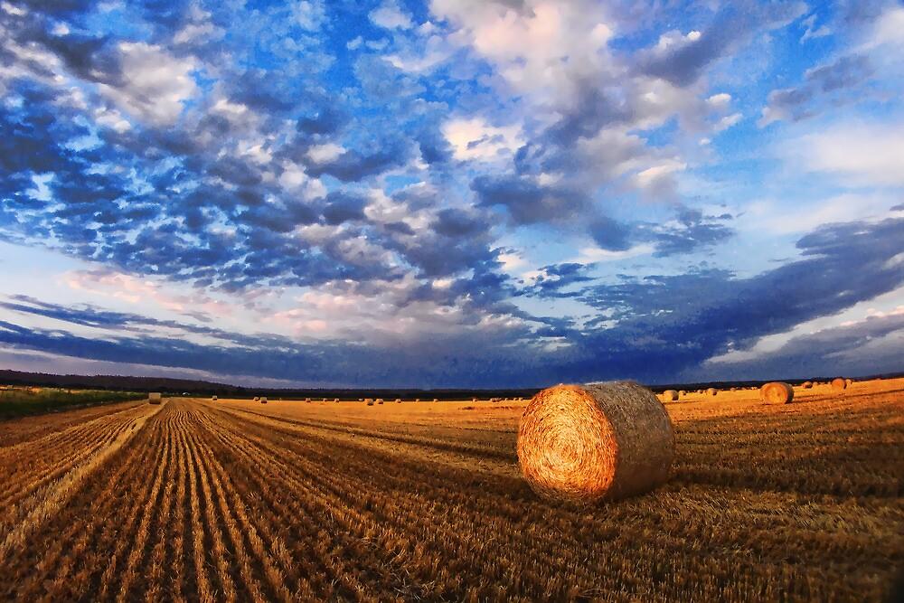 Montana Wheat Field  by James Larson  Redbubble