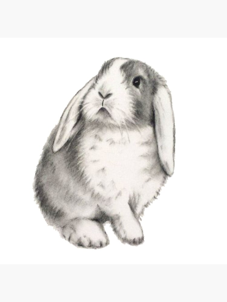 lop rabbit cute rabbit
