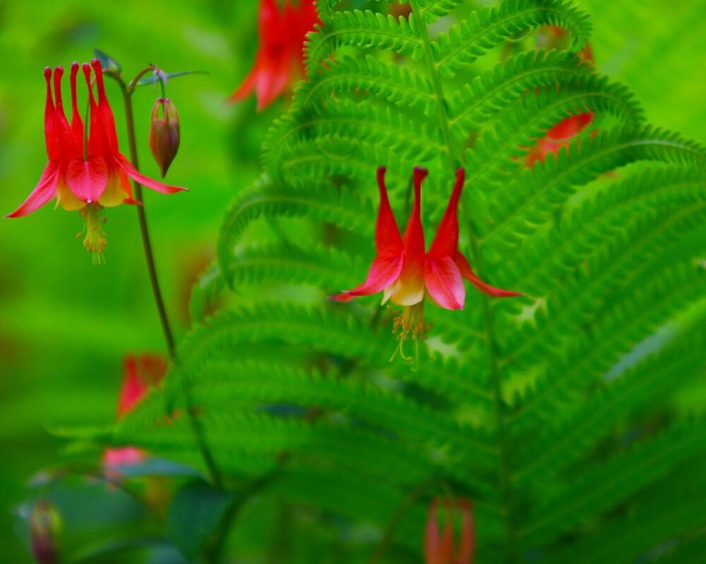 Flowering Fern by Brian Dodd  Redbubble