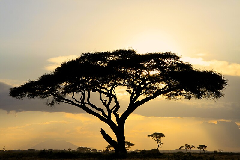African savanna at sunset by Graeme Shannon  Redbubble