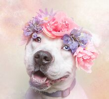 Cali Pit Bull Products