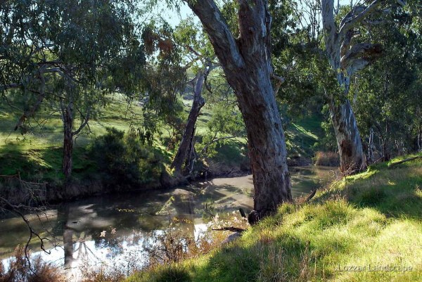 """trees riverbank"""