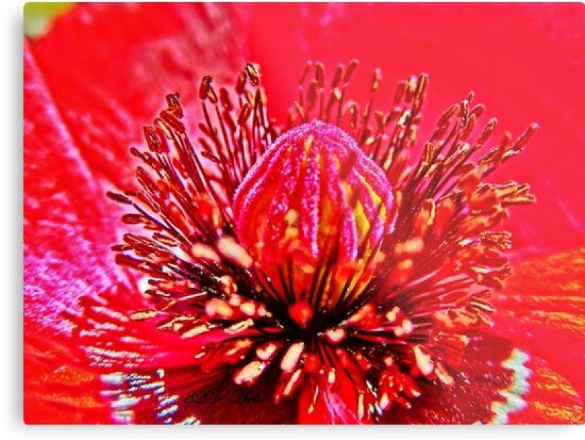 Poppy Dome by 32DARTS