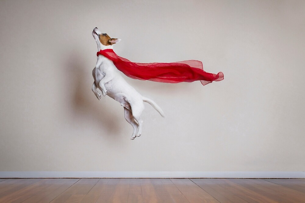 Super Dog by Catherine Holmes  Redbubble
