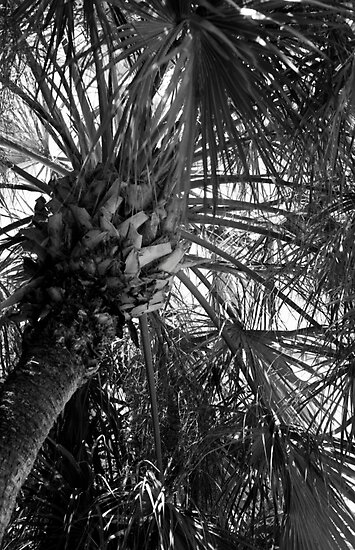 Abundant Palm copyright 2009 Kathy Hunt/Analog Soul Photography