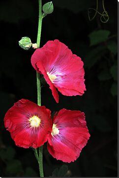 Beerenberg Bloom