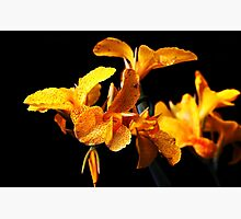 Petalicious Photographic Print by Stephen Mitchell