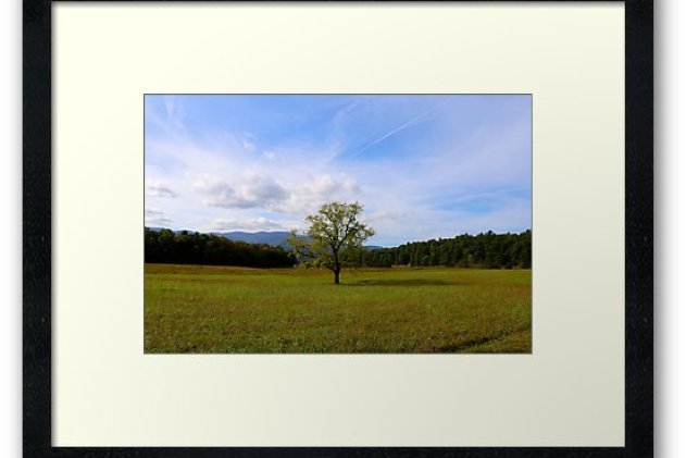 Fields of Cade's Cove