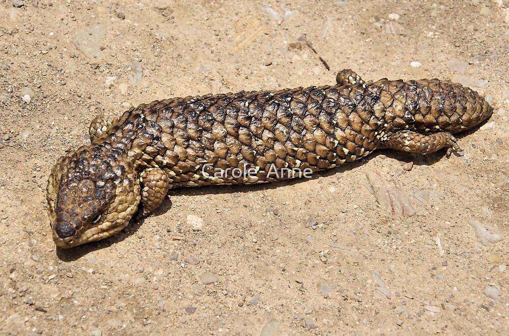 Sleepy Lizard On The Prowl By Carole Anne Redbubble