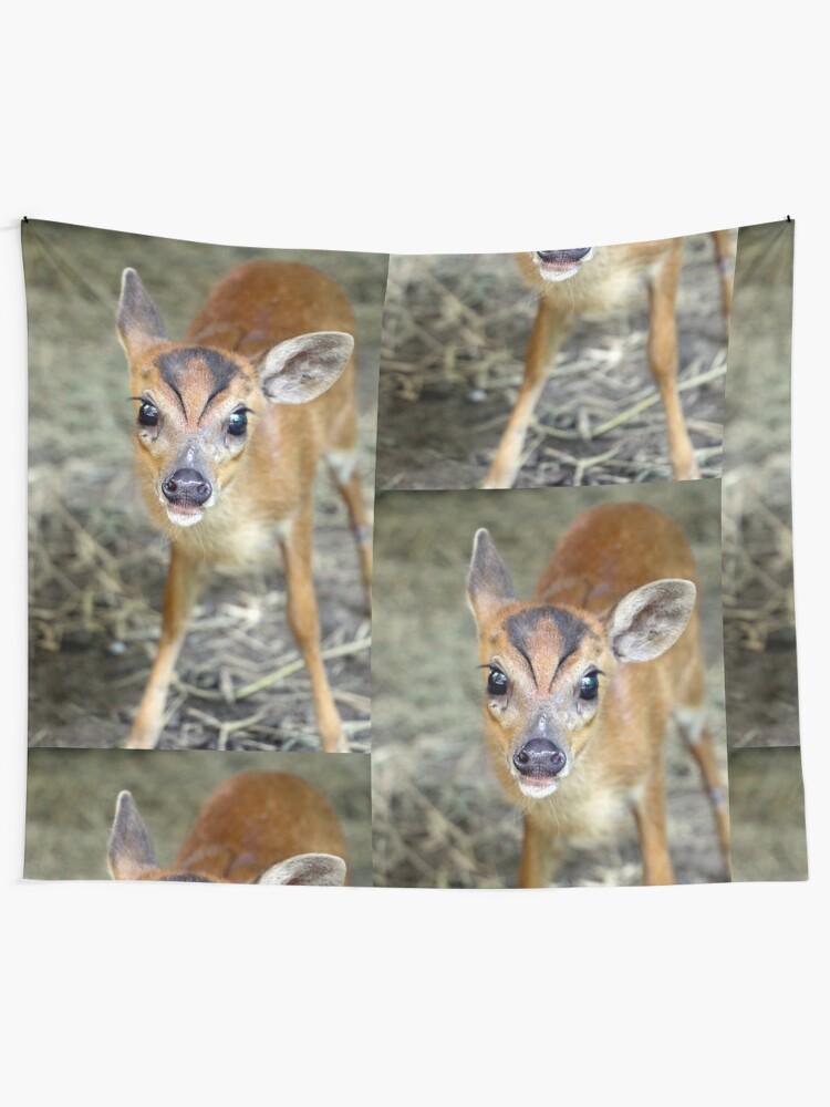 Baby Muntjac Deer : muntjac, Muntjac, Deer