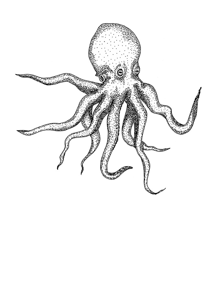 Realistic Octopus Drawing : realistic, octopus, drawing, Giant, Octopus-, Detailed,, Realistic,, Octopus, Drawing