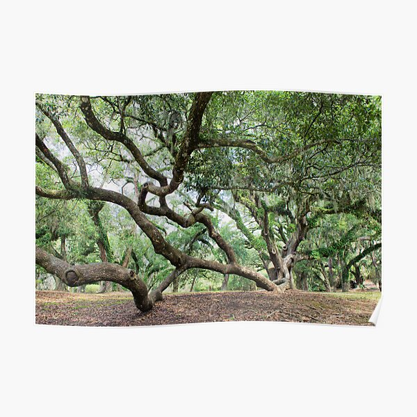 giant trees posters redbubble