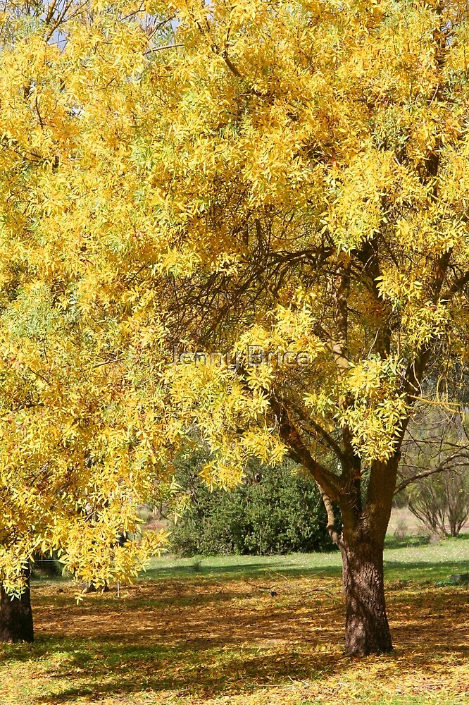 Golden Ash Tree in Autumn by Jenny Brice  Redbubble