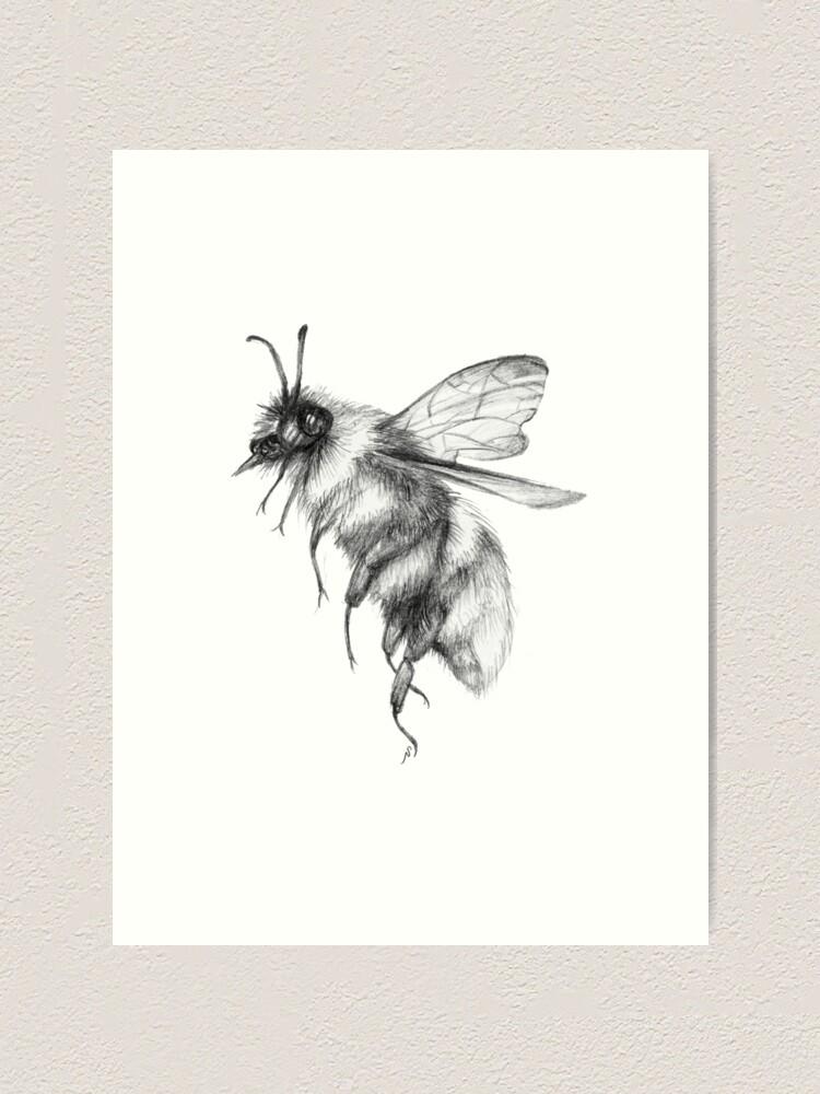 Bumblebee Sketch : bumblebee, sketch, Bumblebee, Sketch