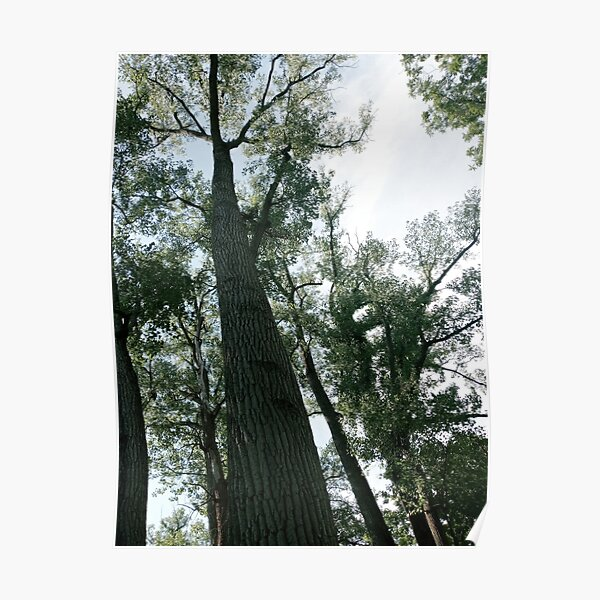 tall tree posters redbubble