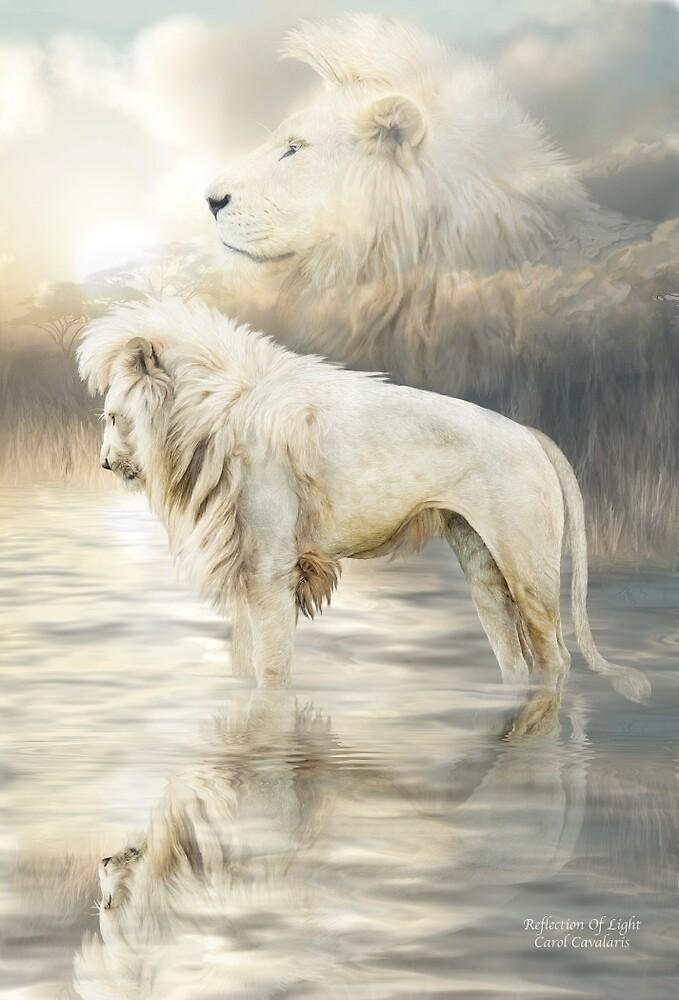 White Lion  Reflection Of Light by Carol Cavalaris