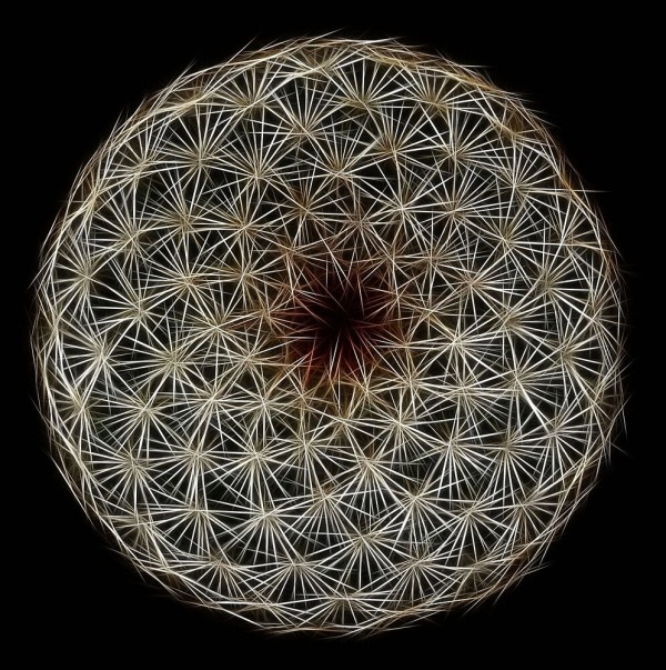 """""""fibonacci' Fractal Spiral Symmetry"""" L Len"""