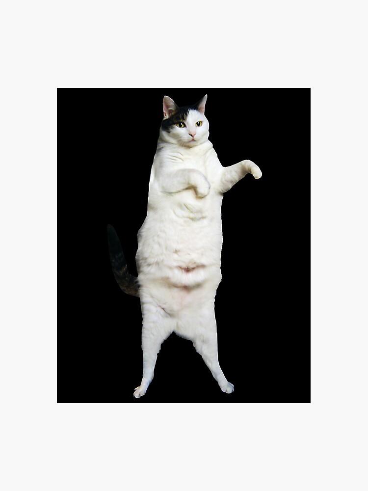kitty cat dance photographic