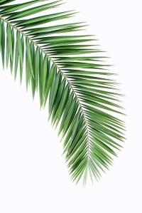 """Palm leaf wall decor, printable leaf palm, printable palm ..."