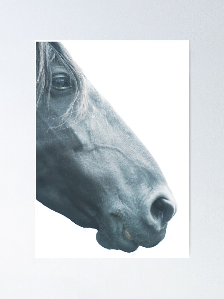 Browse hundreds of inspiring photos of home decor ideas and interior decorating images in good housekeeping's home decor gallery. Horse Head With Mane Elegant Fine Art Print N 3 For Animal Lovers Interior Design Home Decor Still Life Poster By Spallutos Redbubble