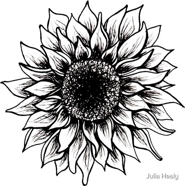"""black and white sunflower"" stickers"