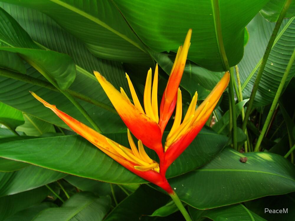 Tropical flowers series  orange heliconia II  by PeaceM