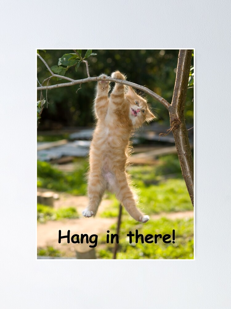 Funny Hang In There : funny, there, There, Poster, Perfect, Funny, Motivational, Office, Humorous, Decor,, Quote