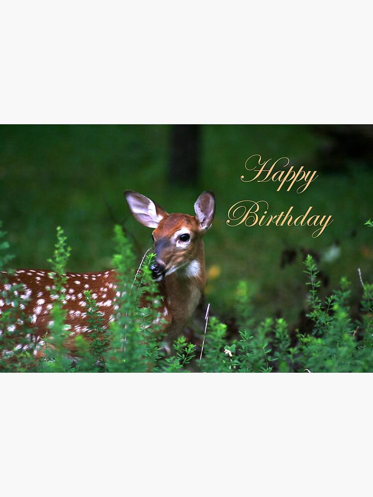 Happy Birthday Images With Deer : happy, birthday, images, Happy, Birthday, Deer