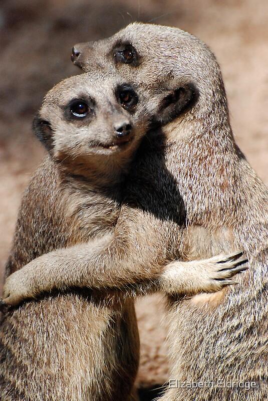Quot Hugging Meerkats Quot By Lizziemorrison Redbubble