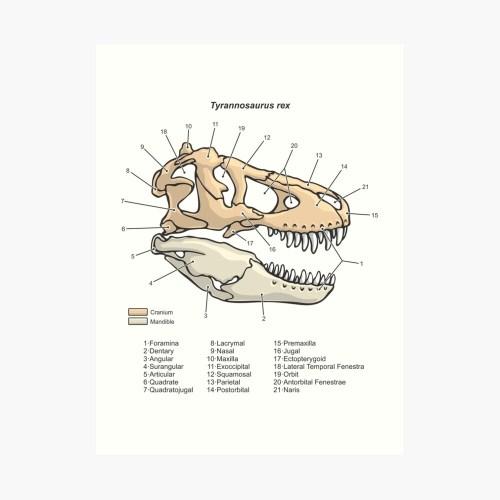 small resolution of  tyrannosaurus rex skull diagram art print by taylorcustom redbubble