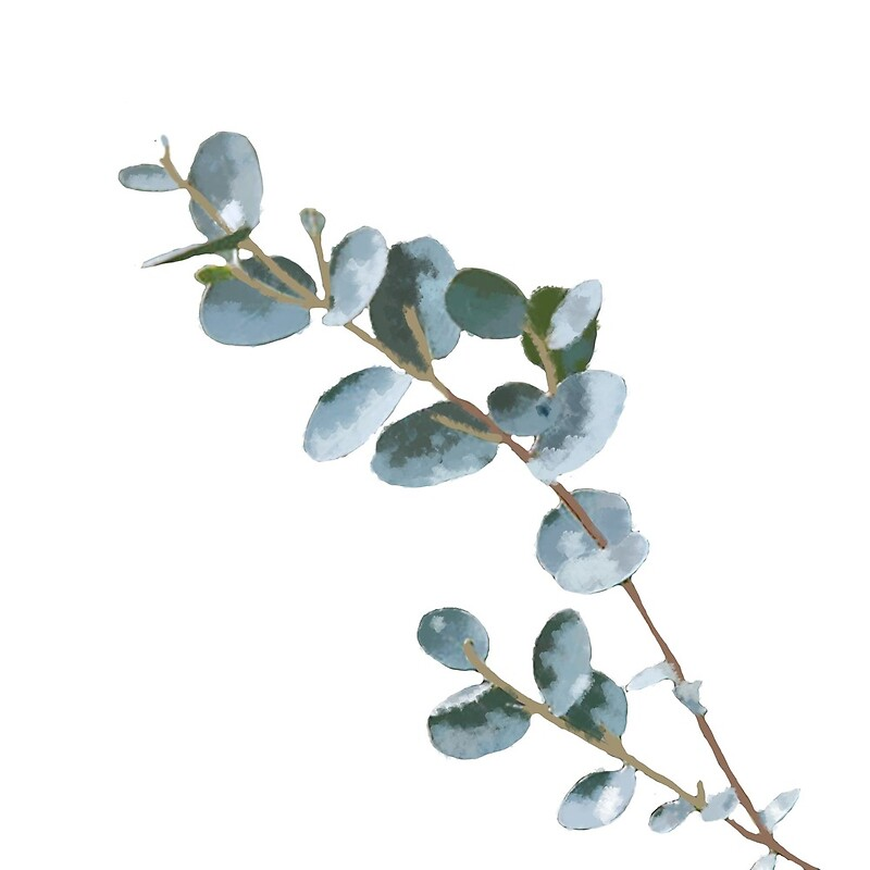 Watercolor Eucalyptus By Bshac Redbubble