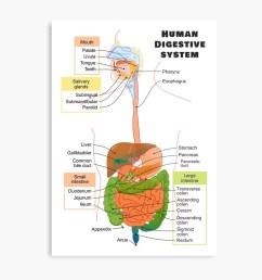 diagram of the human digestive system metal print [ 1000 x 1000 Pixel ]