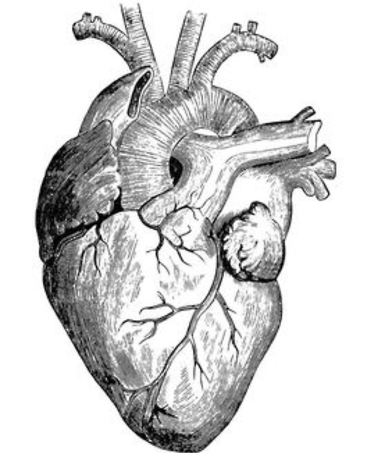 Real Heart Drawing : heart, drawing, Realistic, Heart, Drawing, RockyMountains, Redbubble