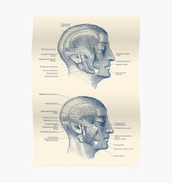 face muscular diagram dual side view poster by vaposters redbubble [ 1000 x 1000 Pixel ]
