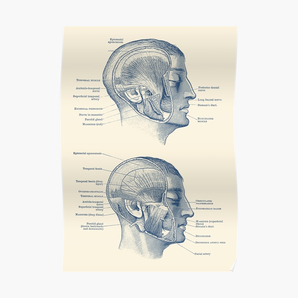 hight resolution of  face muscular diagram dual side view poster by vaposters redbubble
