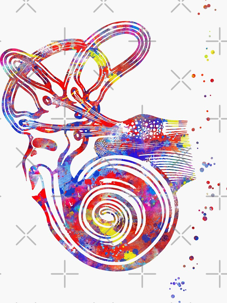 """Ear anatomy, Inner ear, Cochlea Histology, Vestibular ..."